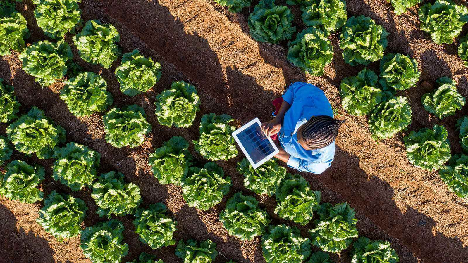 Man standing in a farmland with a tablet